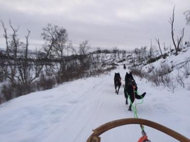 Dog sledding in Tana