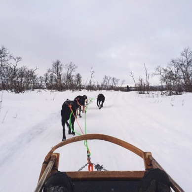 Dog sledding in Tana